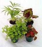 five-terrarium-plants